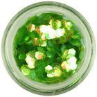 Zöld nail art hatszög - aquaelements