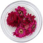 Ciklámen-rózsaszín szárított virágok