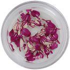 Szárított virág – fehéres rózsaszín