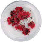 Piros szárított virágok