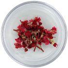 Szárított virág – piros